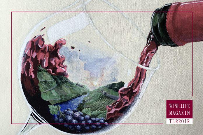 Titelbild des Dossiers Terroir Teil-1 – Autor Dr. Martin Weinert – Wine.Life.Magazin