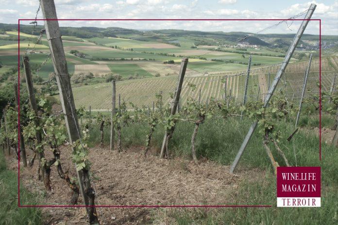 Wine.Life.Magazin – TERROIR TEIL-4: Bei uns in Deutschland