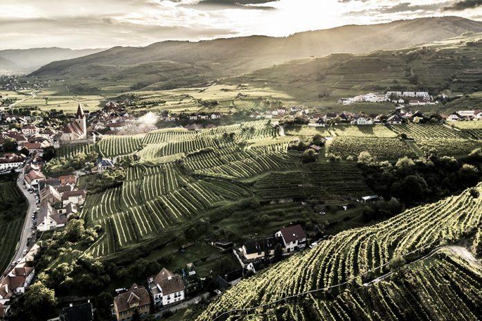 Wine.Life.Magazin – Novellierung des Weinrechts in Österreich