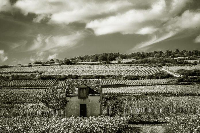 Weinregion Burgund in Zeiten der Pandemie