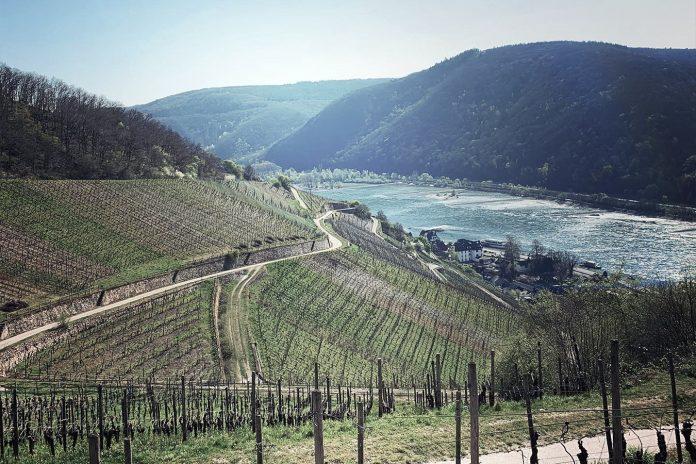 Grosses und Erstes Gewächs vom Bundesrat in der Weinverordnung bestätigt