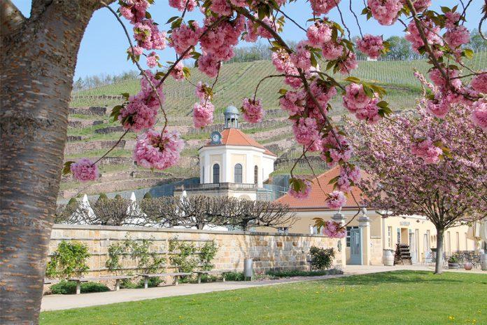 Staatsweingut Schloss Wackerbarth